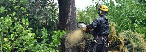 Qu'est-ce que Xylella fastidiosa ,la bactérie tueuse en série d'oliviers?