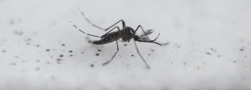 Les moustiques «modifiés», une fausse bonne idée?
