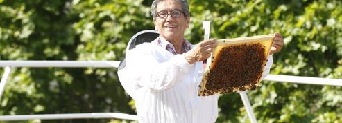 Ibrahim Karout, l'homme qui parle aux abeilles