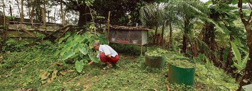 En Martinique et en Guadeloupe, sols et eau sont pollués pour des siècles
