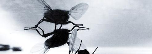 Le secret des mouches pour atterrir au plafond