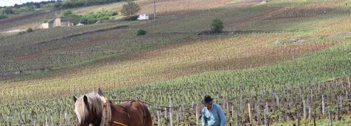 «L'Âme du vin», un documentaire saoulant