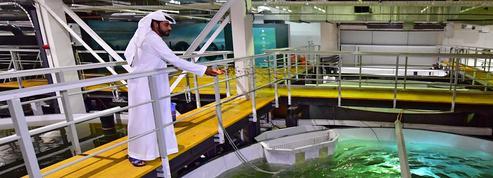Dubaï vendra bientôt ses premiers saumons élevés au milieu du désert