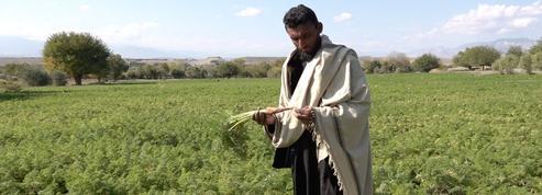Déçu par sept années de lutte aux côtés des talibans, Mohammed Niazi a rendu les armes