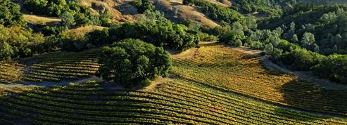 Dans les vallées de Napa et Sonoma, sur la route des vins français de Californie