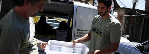 Comment l'Australie s'est débarrassée de la dengue en infectant un moustique