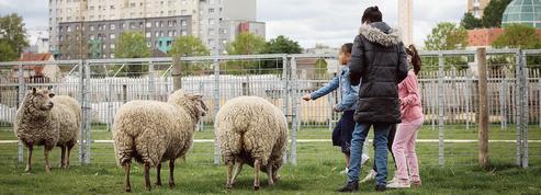 Critiquées par des paysans, les fermes urbaines se défendent