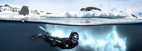Plongée sous les glaces de l'Antarctique, sur les traces du léopard des mers
