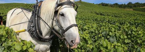 Un couple d'agriculteurs condamné pour leur cheval accusé de produire trop de crottin