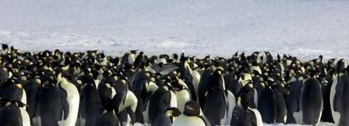 L'Antarctique entre beauté blanche et étendue de glace
