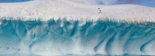 «Les manchots empereurs sont le joyau de la couronne de la faune antarctique»
