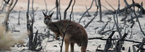 Tempêtes de sable, orages, incendies: le point sur la situation en Australie