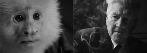 Pour son 74e anniversaire, David Lynch enquête sur Marcel, le singe de Friends