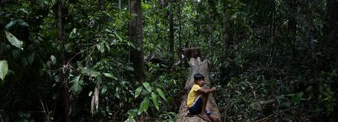 Amazonie: la ruée vers l'or vert