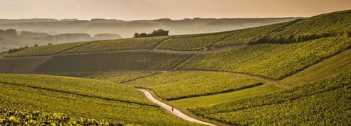 Vignobles: Chablis menacé de perdre l'appellation Bourgogne