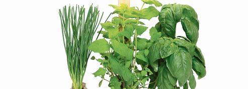 Cultiver ses légumes en appartement, dernière lubie du bobo urbain