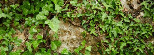 Paris: sous le bitume, les plantes