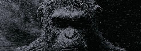 La Planète des singes se relance au cinéma sous l'impulsion de Disney