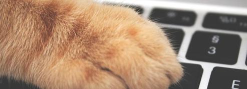 YouTube, Amazon, Spotify... Pourquoi les contenus pensés pour les chats fleurissent partout