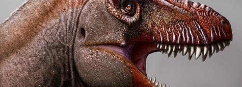 Une nouvelle espèce de tyrannosaure découverte au Canada
