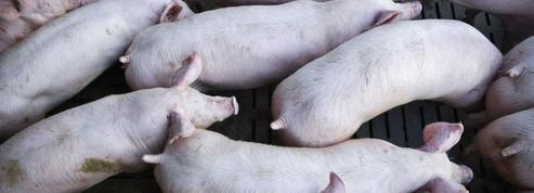 Coronavirus: des containers de porc et de lait bloqués au port