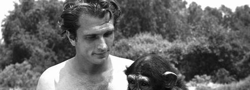Antispécisme: «Contrairement aux humains, les animaux n'ont pas la notion de l'Histoire»