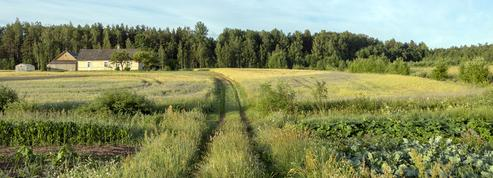 Des pistes pour une agriculture sans pesticides chimiques