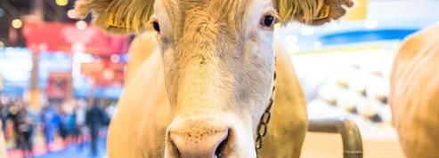 Que savez-vous sur le Salon de l'agriculture?