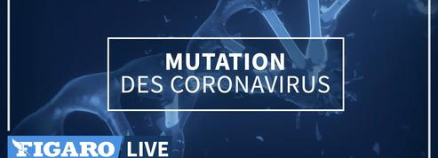Comment mutent les coronavirus