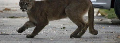 Confinement: les animaux se réapproprient les villes