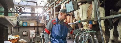 Sodiaal: «Certains petits producteurs risquent de devoir jeter du lait»