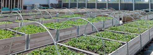L'agriculture urbaine bousculée par le coronavirus