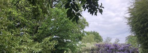 À Giverny, le jardin de Monet fleurit en silence