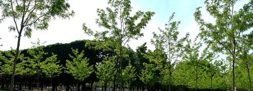 La population favorable à la réouverture des plages, parcs et jardins