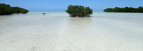 Les «forêts dans la mer» ne survivront pas à une hausse brutale du niveau des eaux
