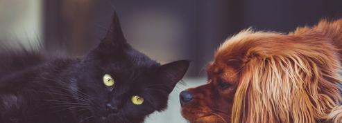 Seul un amoureux des animaux obtiendra un 10/10 à ce test de français