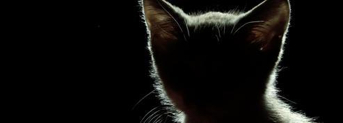 Peur des chats, des fruits, du vent? Les «petites» phobies ne sont jamais anodines
