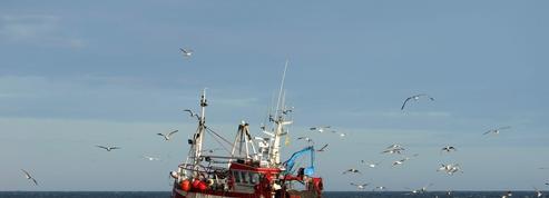 Brexit: bataille pour les poissons de la discorde dans les eaux britanniques