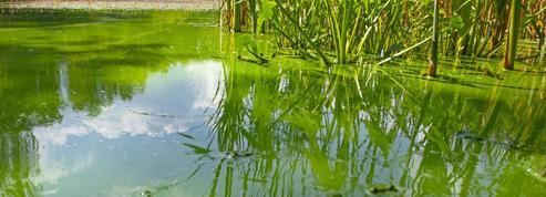 Les eaux douces émettent de plus en plus de méthane