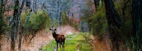 Les forestiers sur le qui-vive