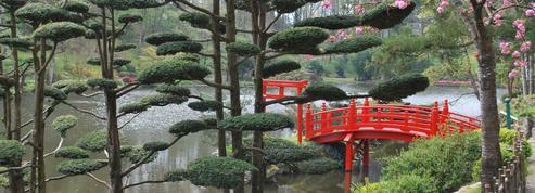 À Maulévrier, le Japon au cœur de l'Anjou