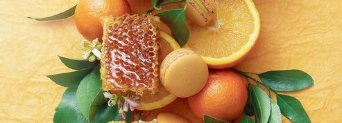 Le miel de maquis corse par Pierre Hermé