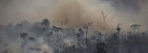 Brésil: les investisseurs au secours de l'Amazonie