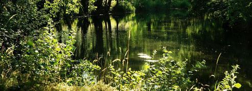 De la Nièvre au Mâconnais, dix idées originales pour (re)découvrir la Bourgogne