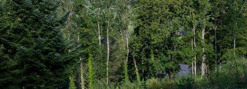 Sécheresse: les plus jeunes forêts semblent plus résistantes
