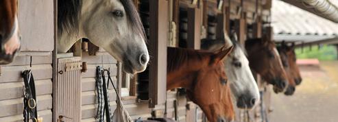 Guillaume Perrault: «Les chevaux mutilés et Un roi sans divertissement de Jean Giono»