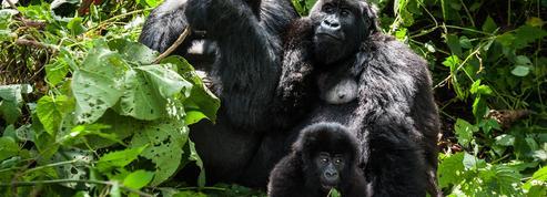 Pour WWF, le déclin des animaux sauvages s'accélère