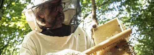 3 heures pour découvrir l'apiculture