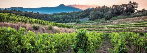 Trinquer sur un volcan: la renaissance des grands vins de l'Etna