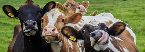 «L'animal est-il un sujet ou un objet?»: ce qu'il faut savoir pour briller au concours d'entrée aux écoles de commerce